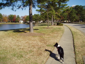 The neighborhood features sidewalks and wide streets - great for walking your dog.